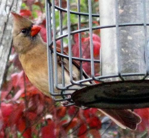 november-11-2008-birds-010-2