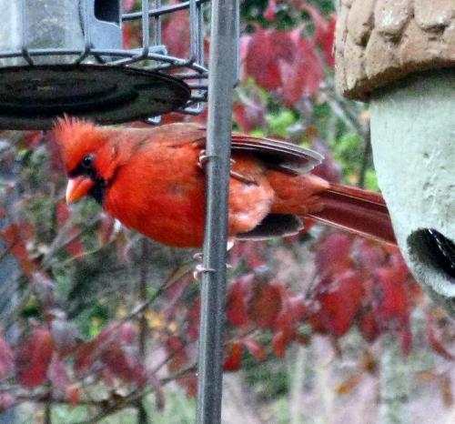 november-11-2008-birds-012-2