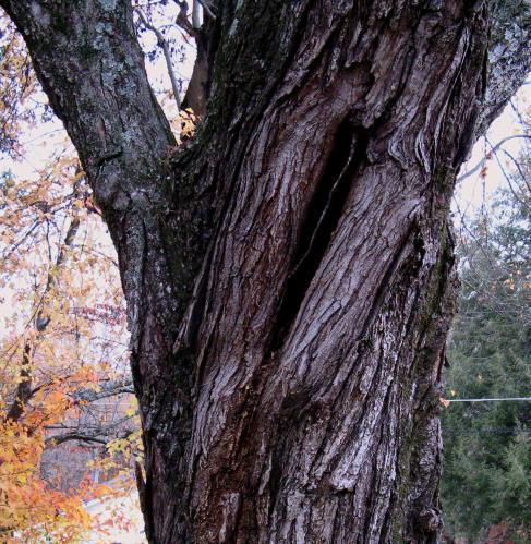 november-11-2008-canon-008-2