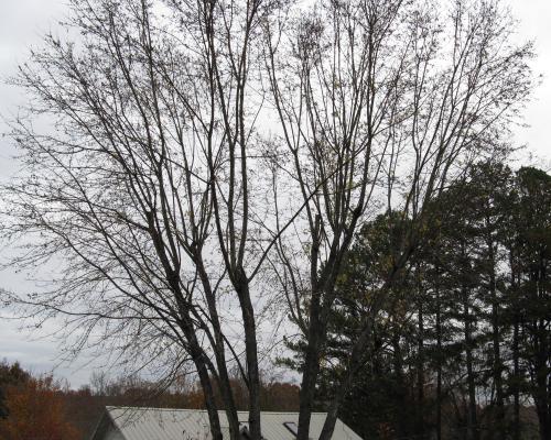 november-16-2008-c-005