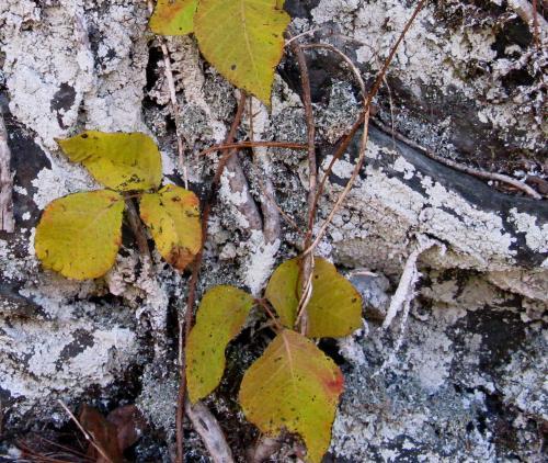 november-6-2008-tellico-plains-030