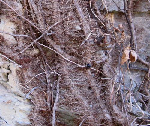 november-6-2008-tellico-plains-034