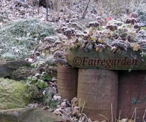 december-13-2008-frost-005-2