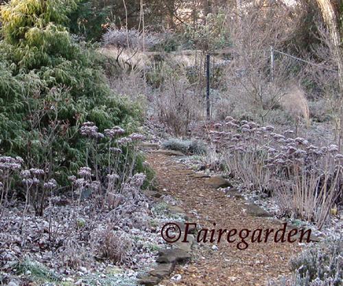 december-13-2008-frost-021-2