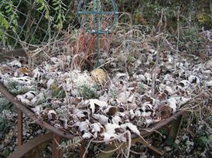 december-13-2008-frost-026-2