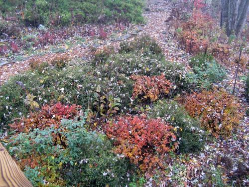 november-14-2008-auto-010