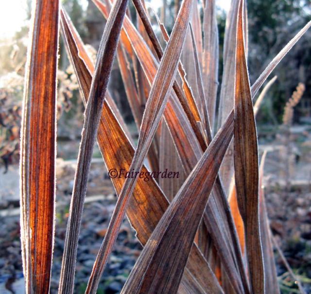 november-25-2008-055-2