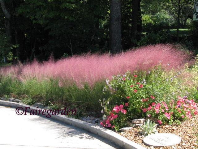 Muhly Grass See You In September Fairegarden