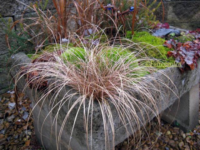 january-27-2009-001-21