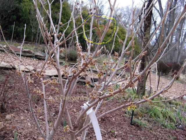 february-11-2009-003-21