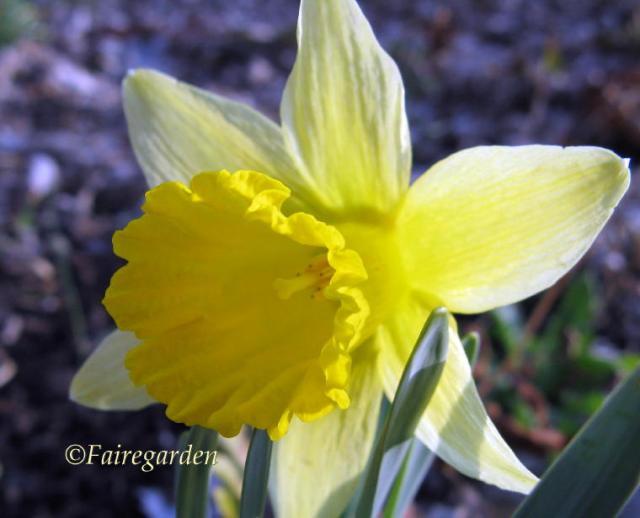 february-19-2009-017-2