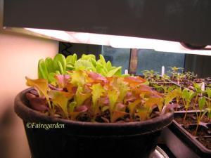 february-2-2009-greenhouse-003-2