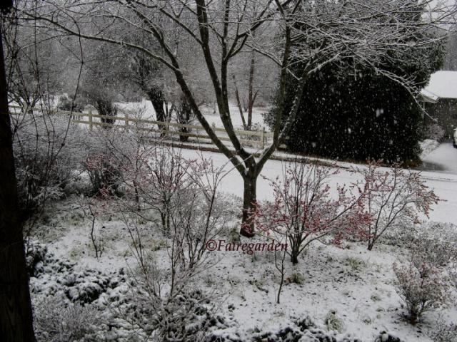 february-2-2009-snow-018-2