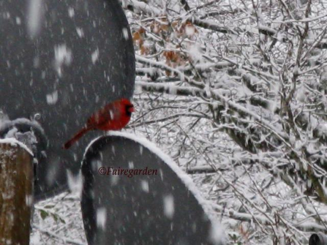 february-2-2009-snow-023-2