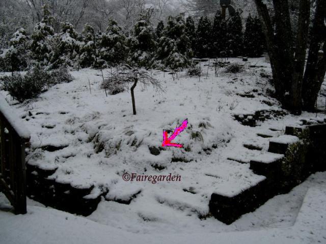 february-2-2009-snow-029-3