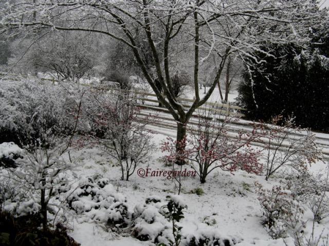 february-2-2009-snow-035-2