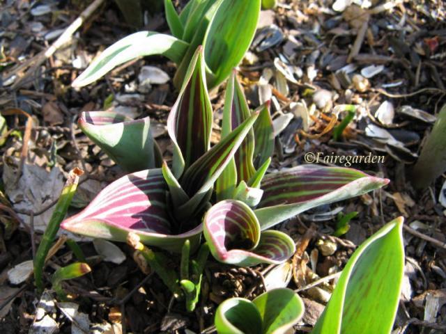february-22-2009-008-2