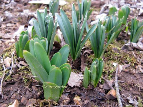 february-25-2009-007-2