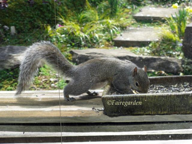 march-9-2009-squirrel-001-2