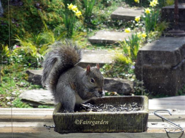 march-9-2009-squirrel-004-2