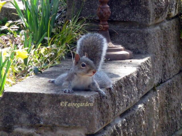 march-9-2009-squirrel-010-2