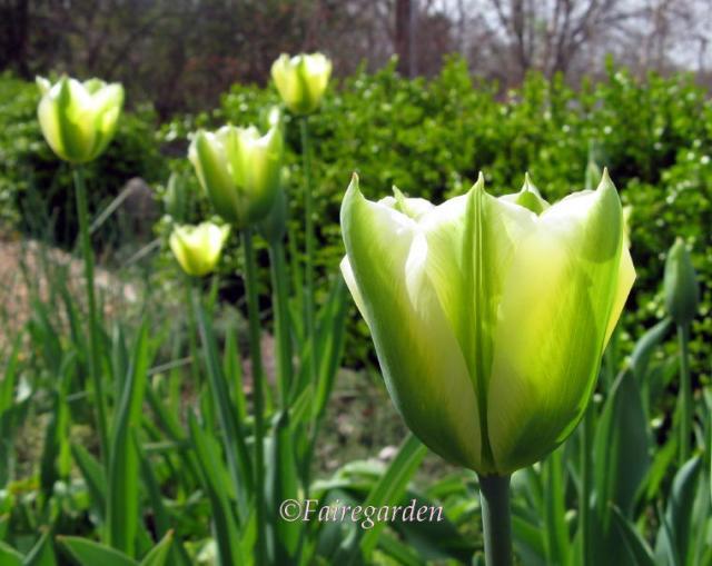 april-5-2009-more-021-2