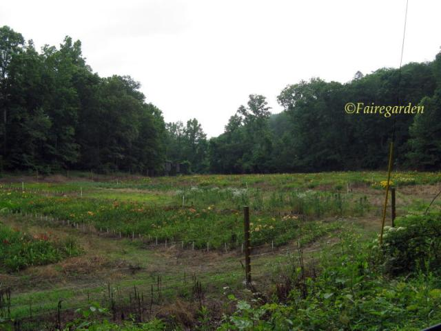June 17, 2009 Sunshine Hollow 001 (2)