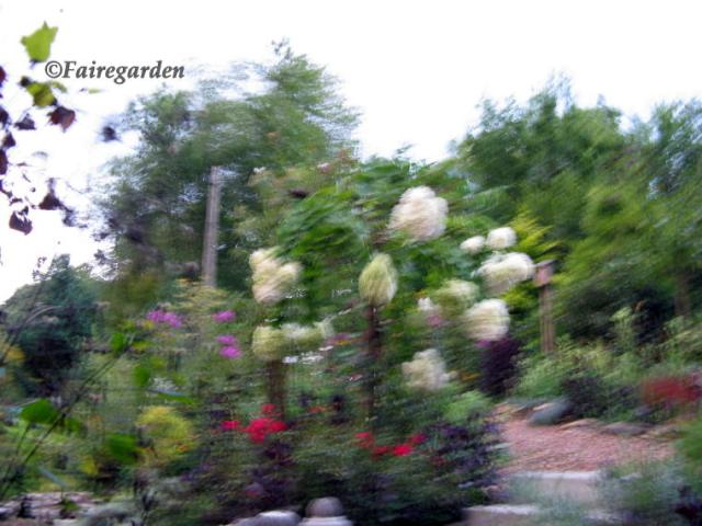 August 13, 2009 014 (2)