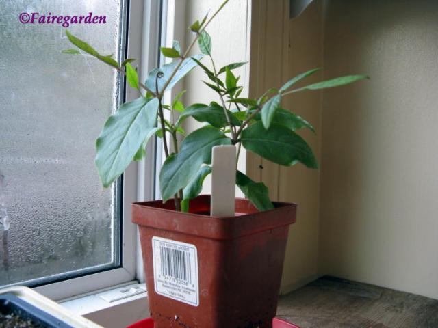 February 2, 2009 greenhouse 007 (2)
