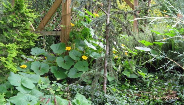 September 3, 2009 Mouse Creek 102 (2)