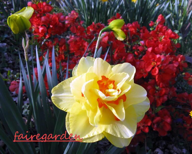GardenAtoZ - Campanas de coral Heuchera - Jardín de A a Z