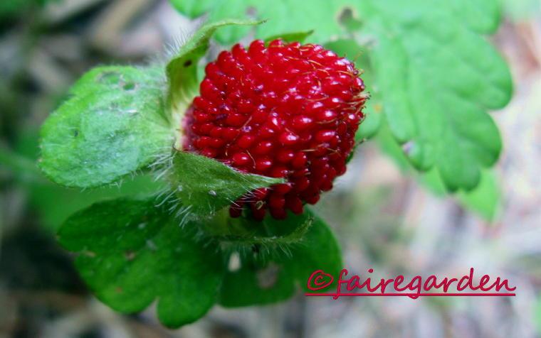 Wild Strawberries 1957  IMDb