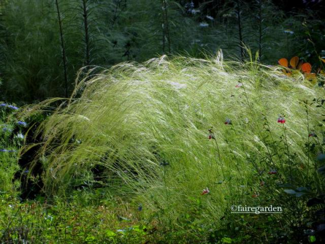 Stipa tenuissima is a useful filler matrix
