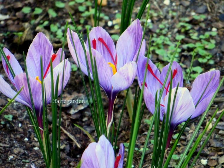 Top Ten October Blooming Plants Fairegarden