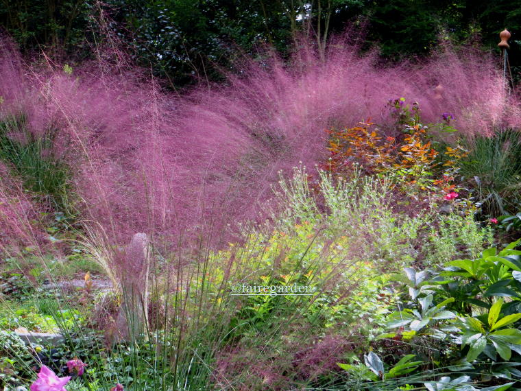 When does purple grass come back 28 images freeze for Ornamental grasses that stay green all year