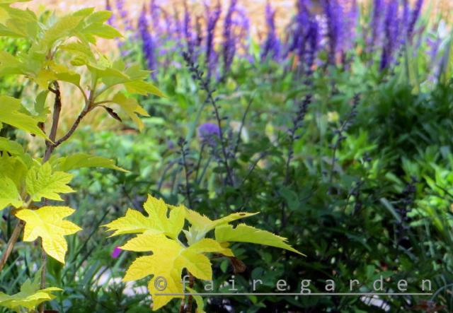 Sierra Exif JPEG